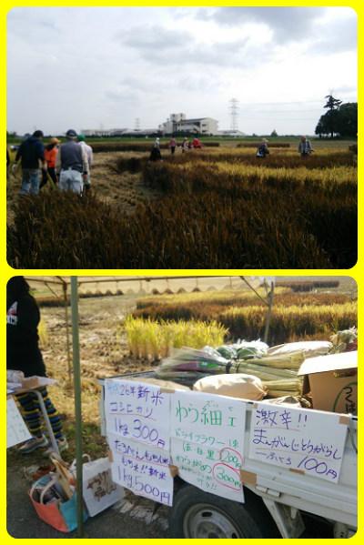 稲刈りH261012